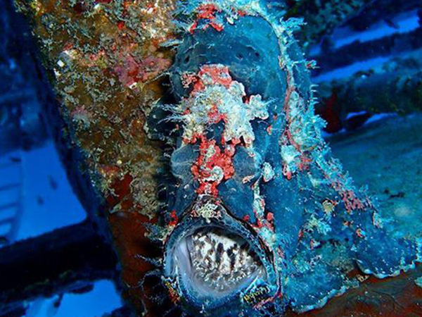 Painted frogfish, Bohol Divers Wreck