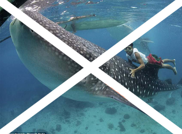 5 reasons not to swim with whale sharks in Oslob